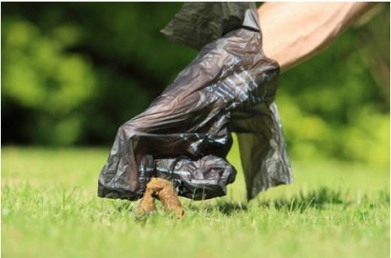 Sprzątaj po swoim psie