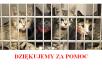 Azyl dla Kotów