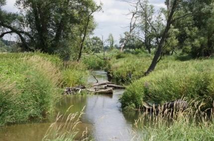 Chojnowski Park Krajobrazowy - Rzeka Jeziorka fot. Parki Otwock