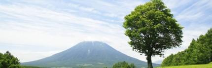 Reflekso - tree.jpg