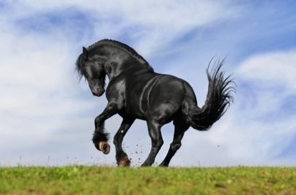Czarny Koń Internetowy Sklep Jeździecki - iStock_000012876642Small.jpg