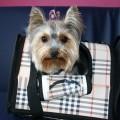 Salon strzyżenia psów i kotów Psi Stylista - Zadbaj o swojego Przyjaciela - Psi styl 155.jpg
