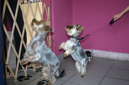 Salon strzyżenia psów i kotów Psi Stylista - Zadbaj o swojego Przyjaciela - IMG_0777.jpg