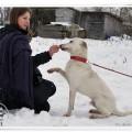 młody, przyjazny psiak szuka domu - DSC09450.JPG