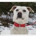 młody, przyjazny psiak szuka domu - DSC09419.JPG