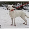 młody, przyjazny psiak szuka domu - DSC09466.JPG
