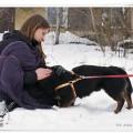 nieduży, młody pies czeka na dom - 21645_580387671989288_453391215_n.jpg