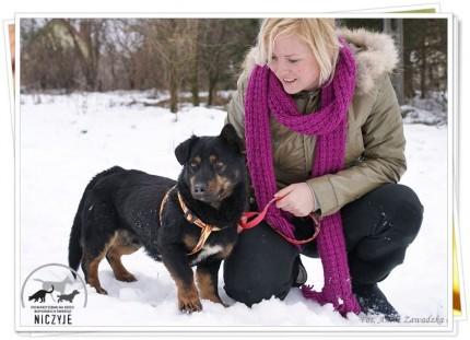 nieduży, młody pies czeka na dom - 31468_580387301989325_486446916_n.jpg