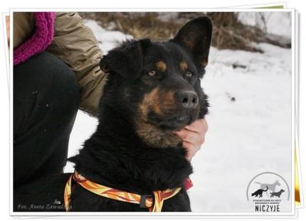 nieduży, młody pies czeka na dom - 602075_580387485322640_1660381536_n.jpg