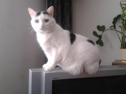 szukam białej kotki w czarne łaty - 2013-01-13 11 06 03.jpg