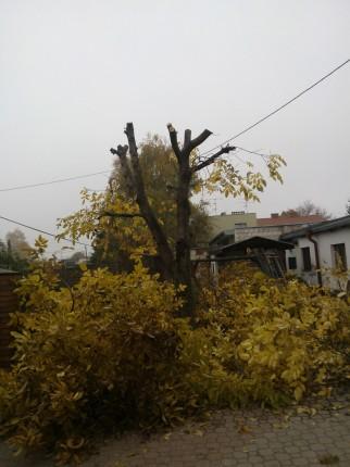 Wycinka drzew, zakładanie ogrodów, prace w ogrodzie  - WP_000250.jpg
