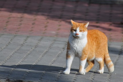 Zaginął rudy kotek!!!! - image.jpg