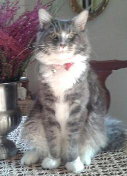 Zaginął kot w okolicy ul. Kombatantów - Luis.jpg