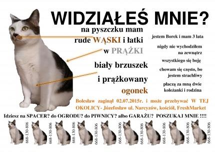 Zaginął KOT Boleslaw - Bolesław.jpg