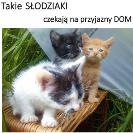 oddam kociaki słodziaki - 2015-07-26_12h07_16.png
