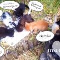 oddam kociaki słodziaki - 2015-07-26_12h07_44.png