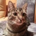 Zaginęła Kotka Mimi - 20141101_162936.jpg