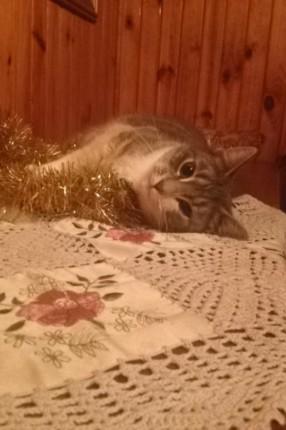Zaginął kot! - image.jpeg