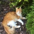 Zaginęła rudo-biała kotka - IMG_1070.JPG