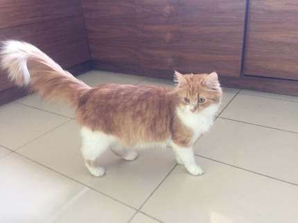 Zaginęła rudo-biała kotka - IMG_1069.JPG